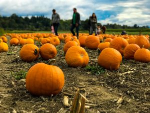 fall events in howard county