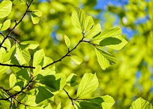 blog img - The Vine is Going Green in Honor of Earth Day